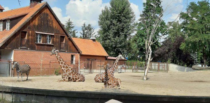 Z wizytą w najstarszym w Polsce ZOO we Wrocławiu.